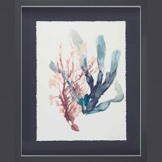Camelot Sweet Seaweed I 43cm x 53cm Picture Black Frame By Jennifer Goldberger
