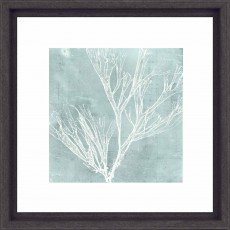 Camelot Seaweed on Aqua III 33cm x 33cm Picture Black Frame by Vision Studio
