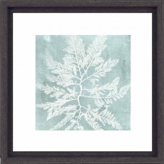 Camelot Seaweed on Aqua I 33cm x 33cm Picture Black Frame by Vision Studio