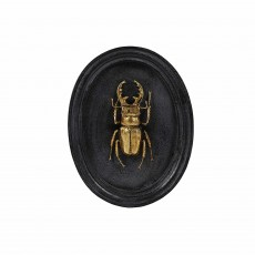 Mindy Brownes Insect Plaque Black & Gold (Set of 3)